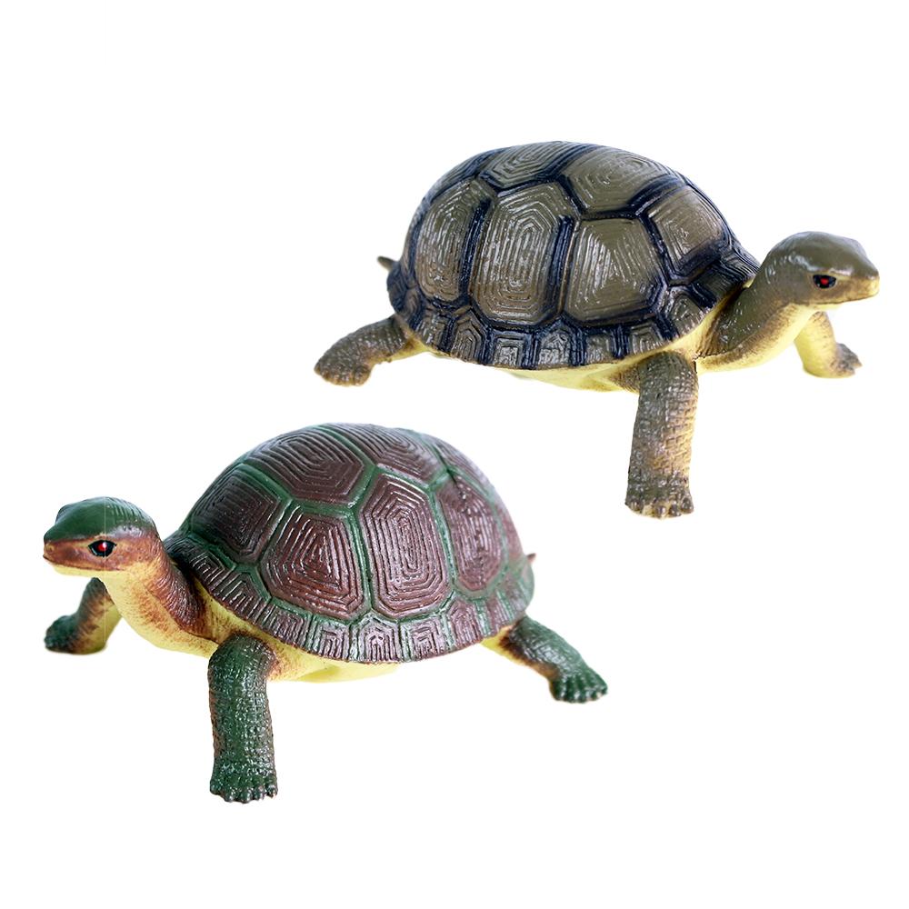korytnačka, 2 druhy, 12 cm